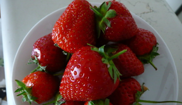 Summer strawberries from Soave in the Veneto